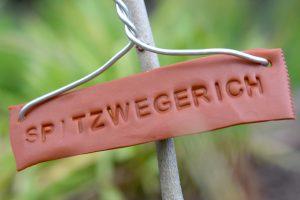 Spitzwegerich