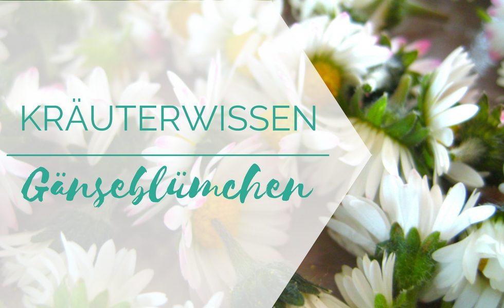 Kräuterwissen Gänseblümchen
