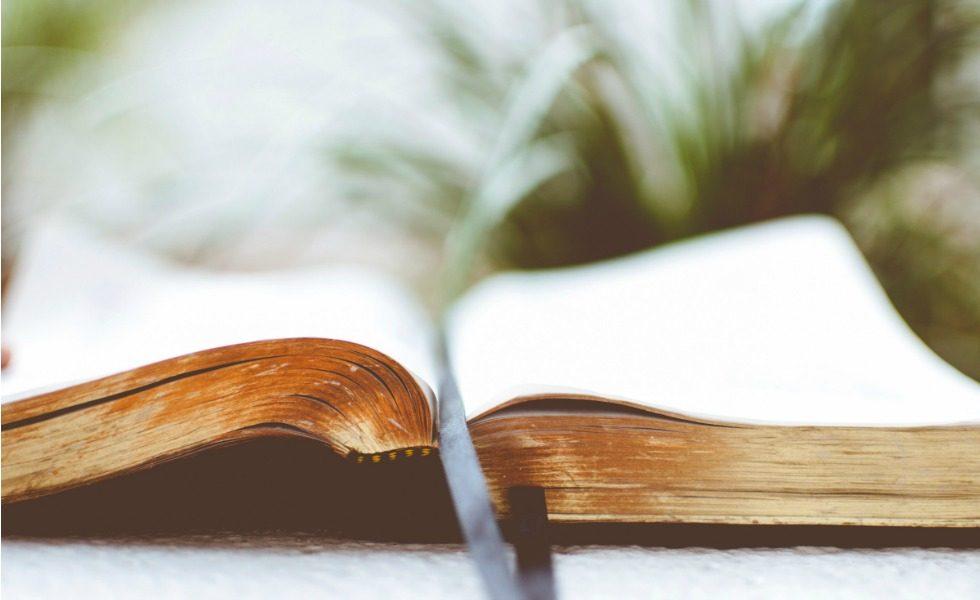 3 Bücher über Kräuter, die du lieben wirst