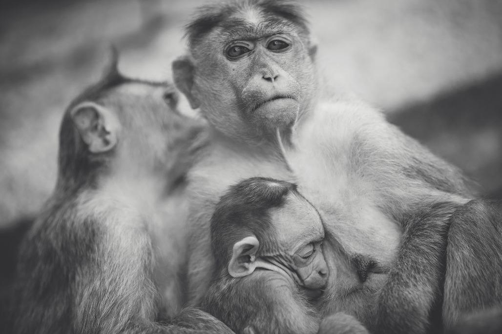 Tierfamilie Familie