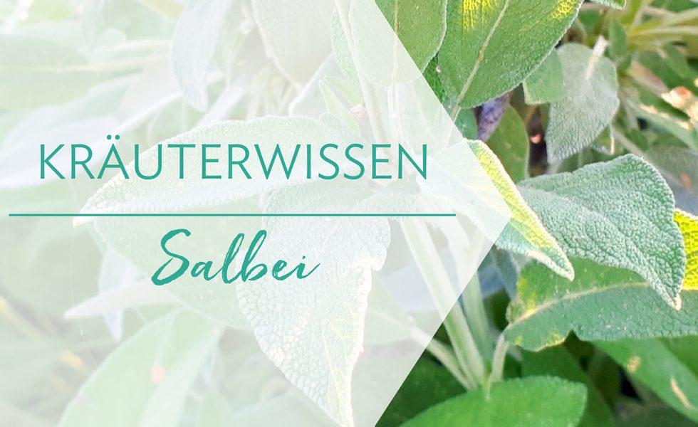 Kräuterwissen Salbei