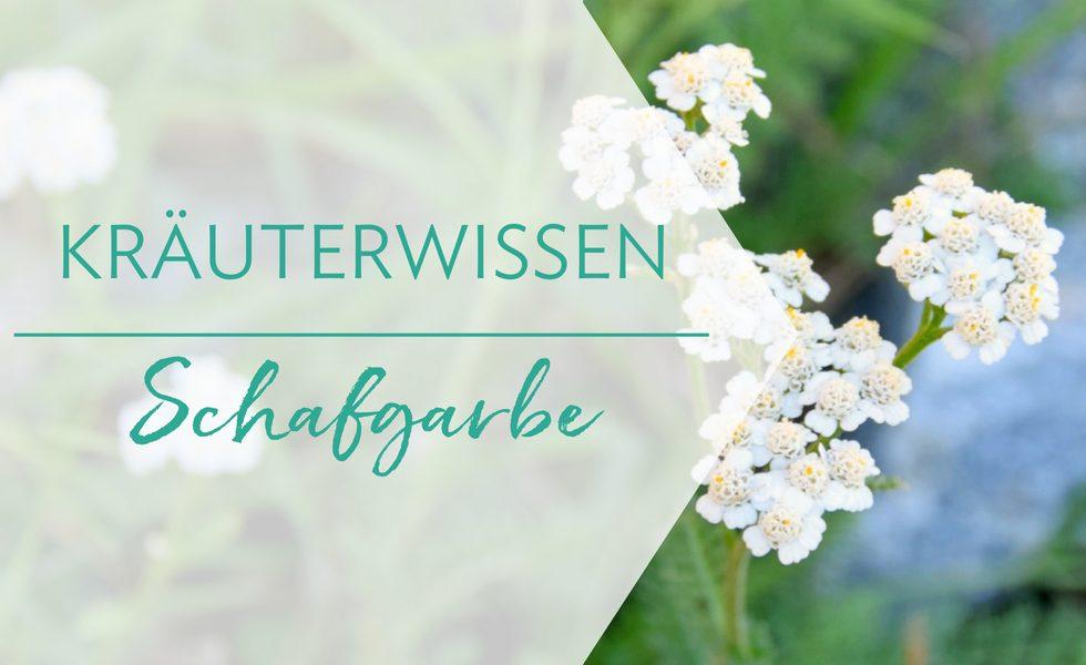 Heilkraut Schafgarbe