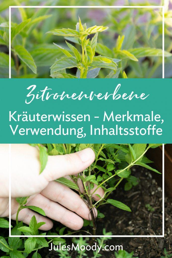 Pinterest Grafik_Kräuterwissen Zitronenverbene